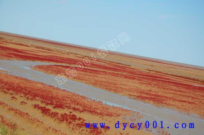 东营海边美景照片欣赏---2011国庆记者游记