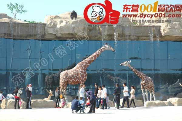 东营001餐饮网::黄河三角洲动物园(图)